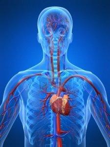cardiosystem